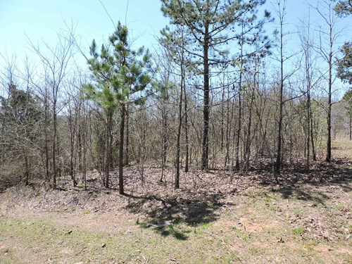 21.60 Acres, more or less off Jenkins Road