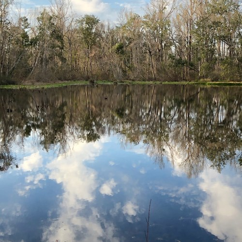 30+ ACRES, SPRING FED POND AND POOL WITH 4/2!!!