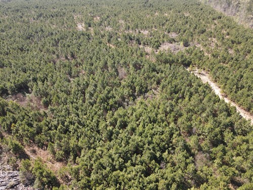 Pine Plantation for sale in Union County AR near Mount Holly