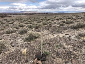NEVADA RESIDENTIAL BUILDABLE LAND LOT FOR SALE IN FERNLEY NV