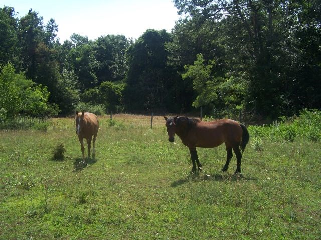 43.3 ACRES OF LAND FOR SALE IN PATRICK COUNTY, VA