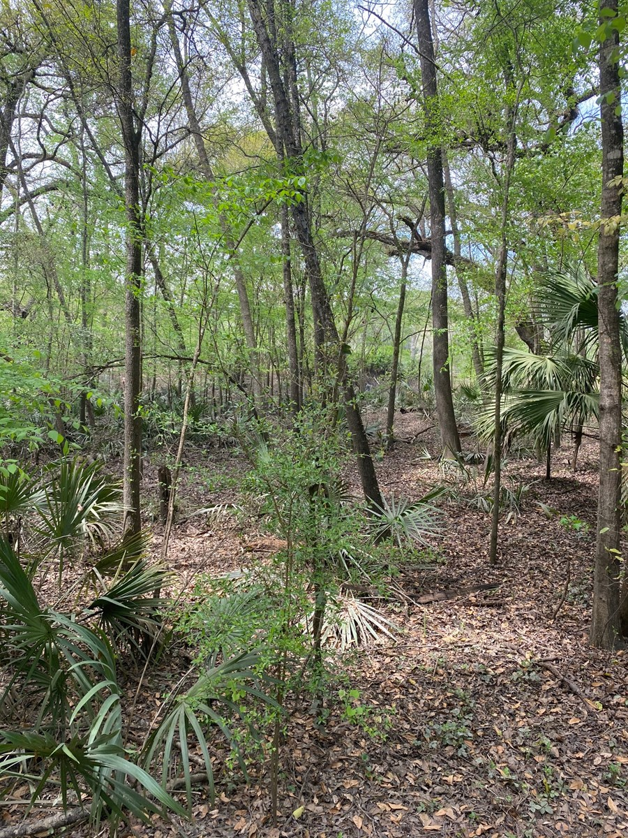 5.47 ACRES IN MAJESTIC SUWANNEE RIVER OAKS SUBDIVISION FOR O