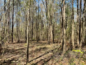 10 ACRES IN HIGHLAND HOME / CRENSHAW COUNTY
