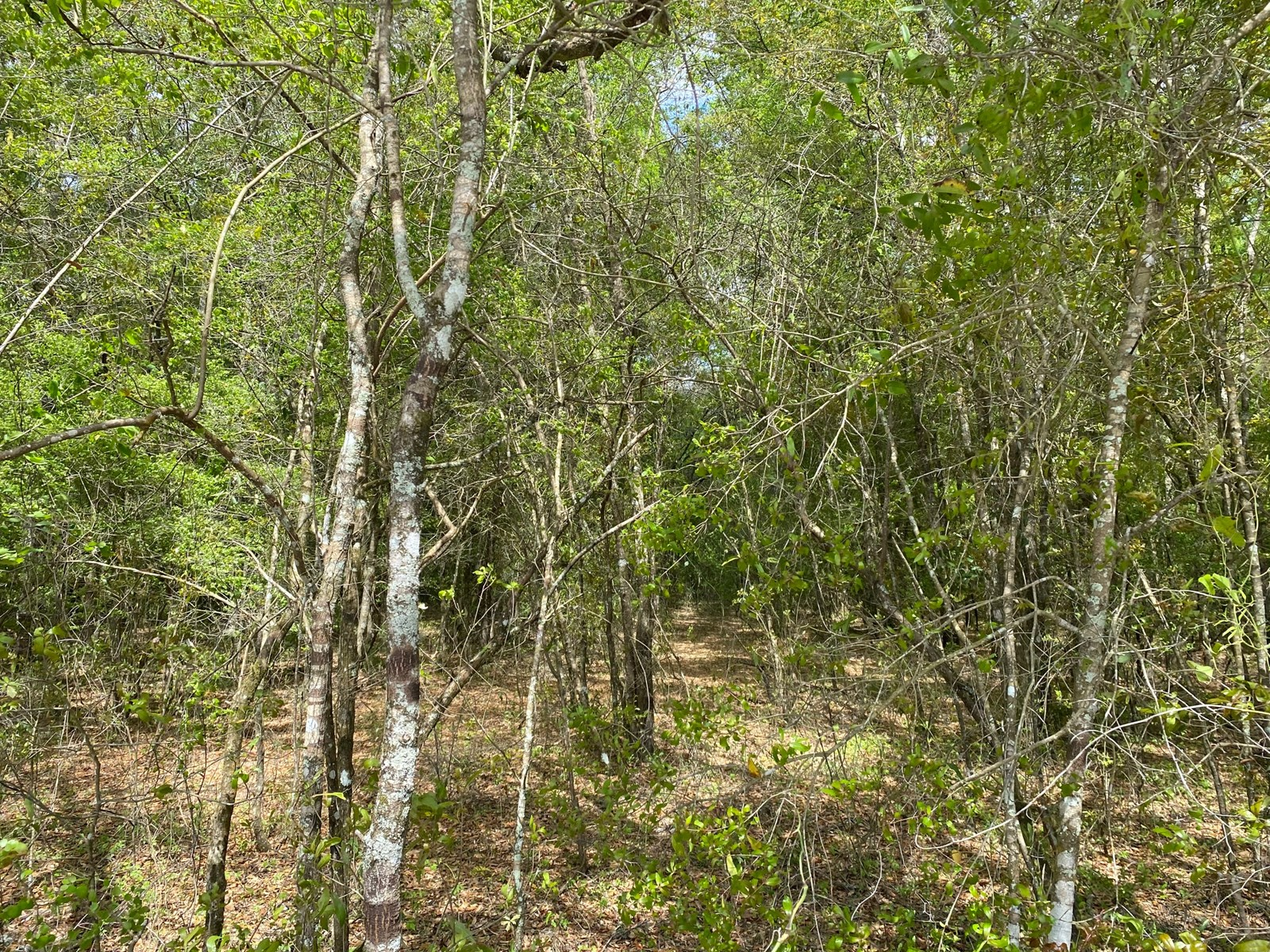 VACANT LOT NEAR THE SUWANNEE RIVER IN MAYO, FL FOR $40,000!!