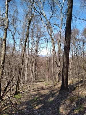 57.3 ACRES UNRESTRICTED LAND IN THORN HILL, TN FOR SALE