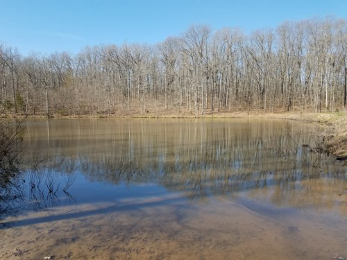Land For Sale! 22+/- Acres Vacant Land With Pond!
