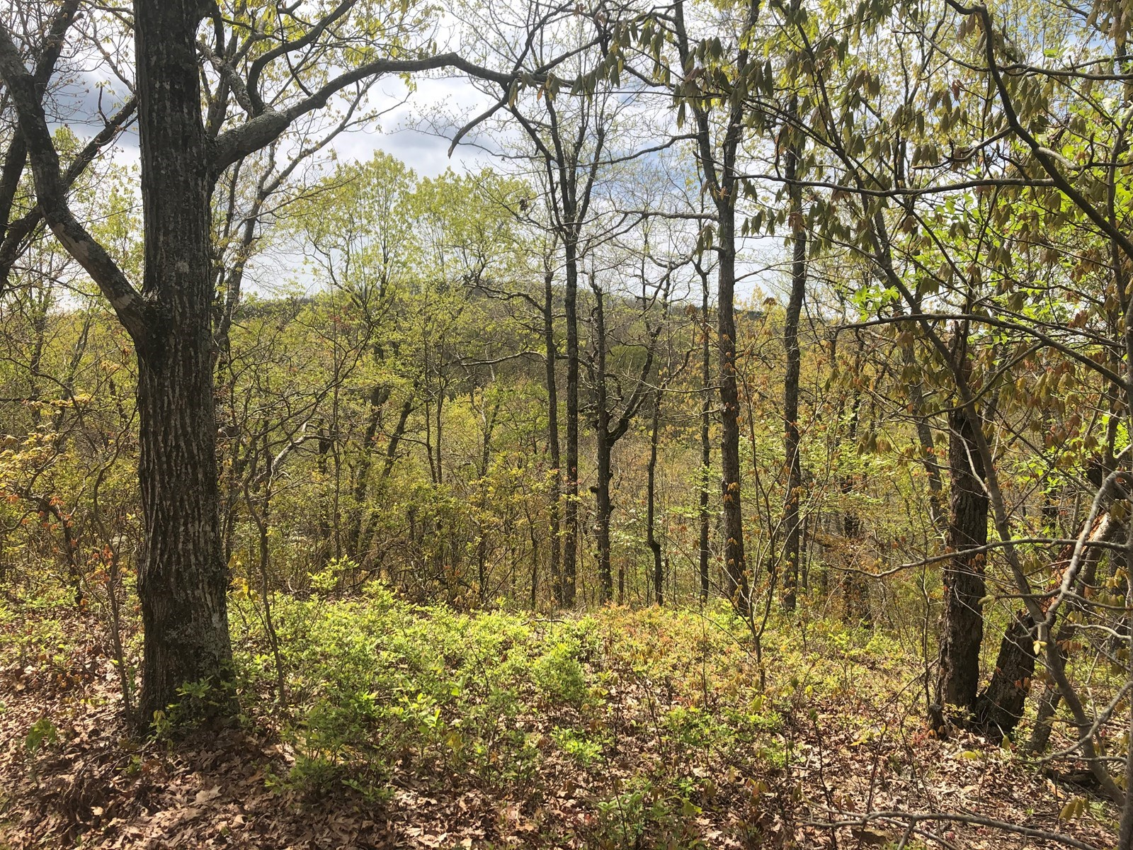 37 Acres of Arkansas Hunting and Recreational Land