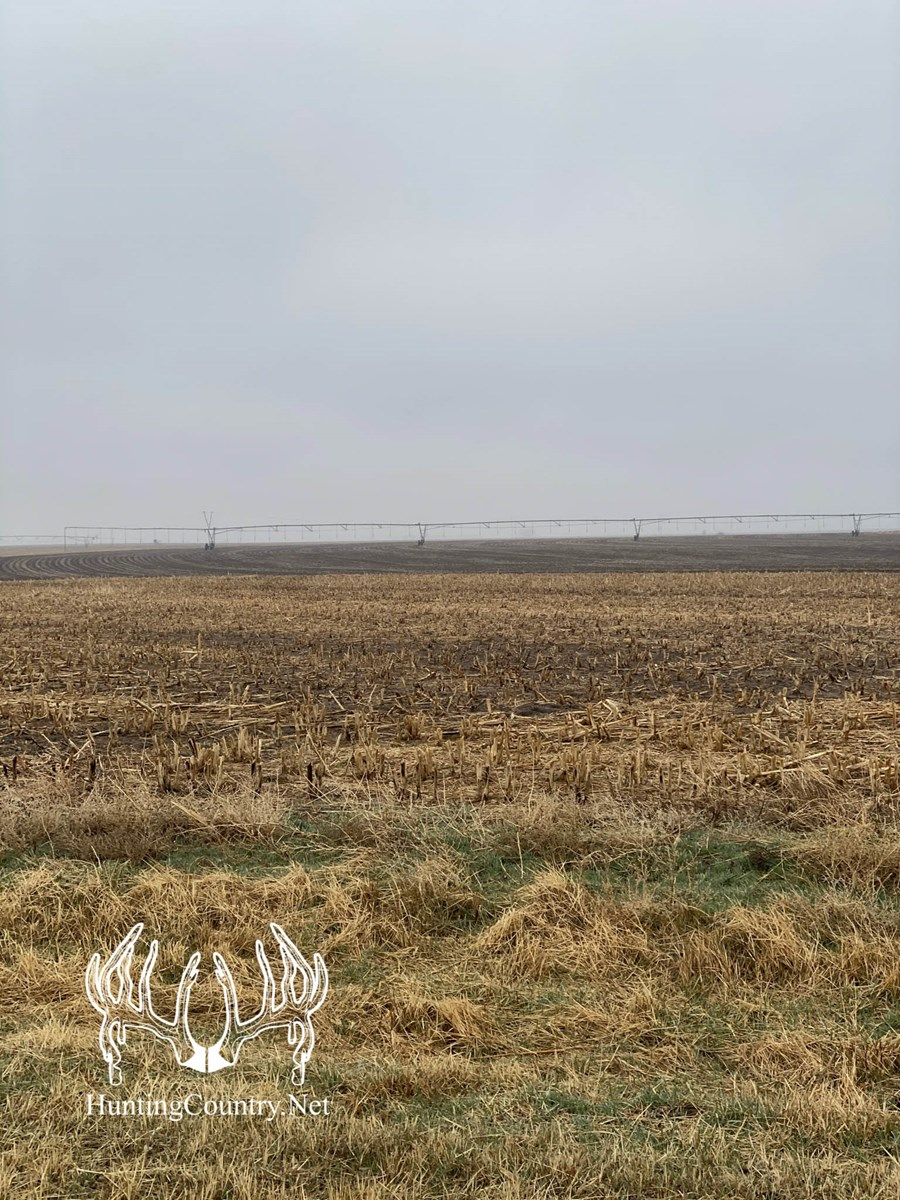 146 acres m/l Ford County Kansas Irrigated Cropland For Sale