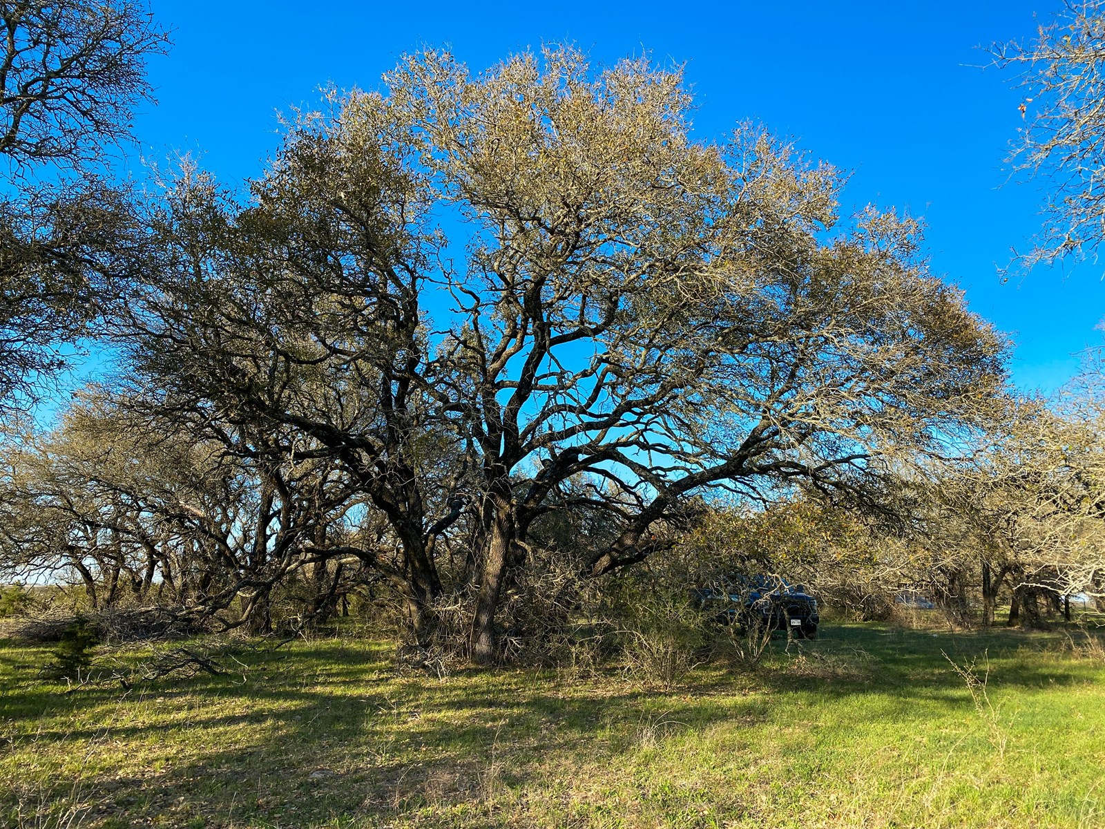 Land for Sale in Texas 29+/-Acres in Hamilton County