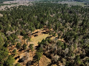 50 ACRES HUNTING TIMBER LAND FOR SALE EAST FELICIANA PARISH