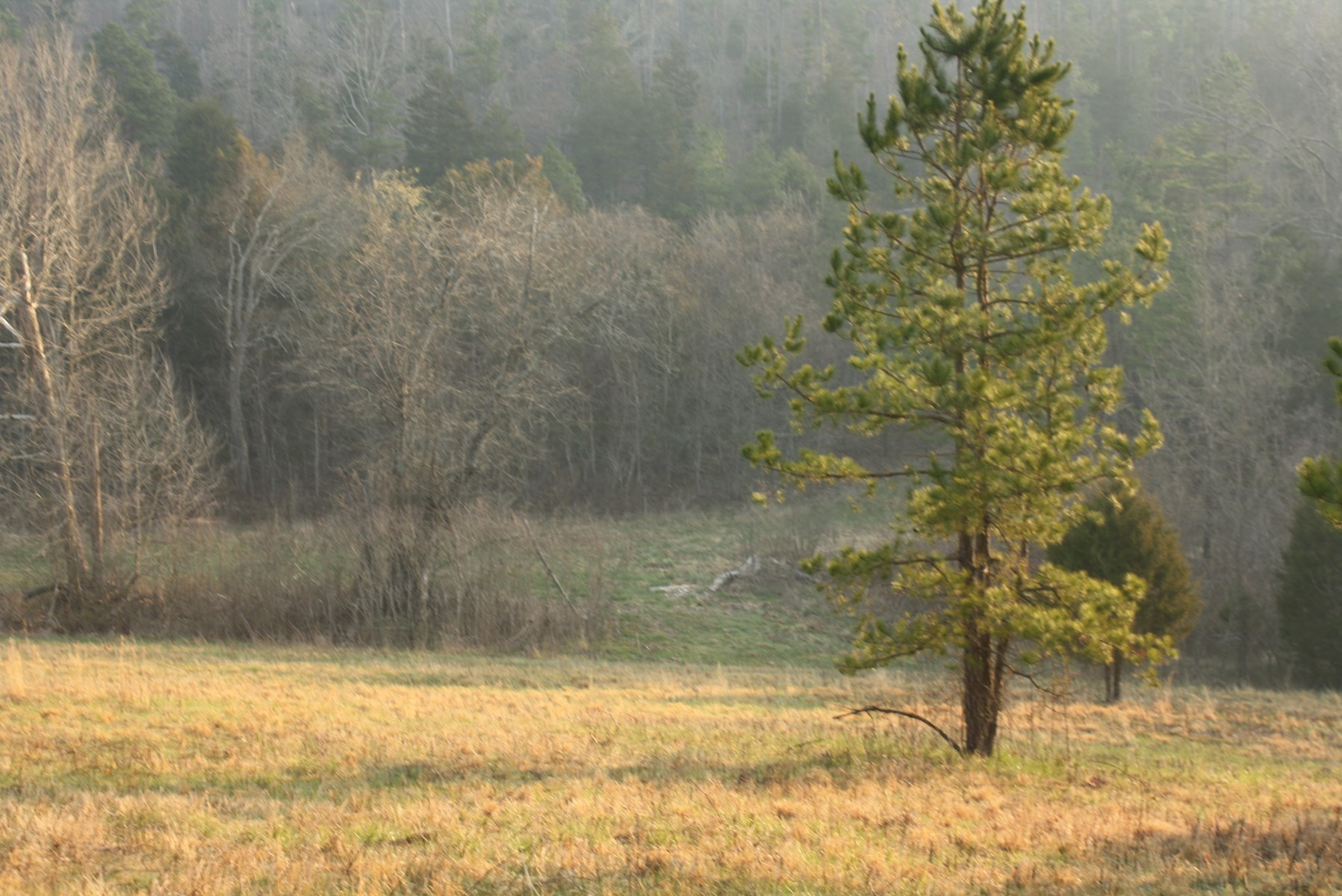 128 Acres with Well and Electric in Douglas County, MO