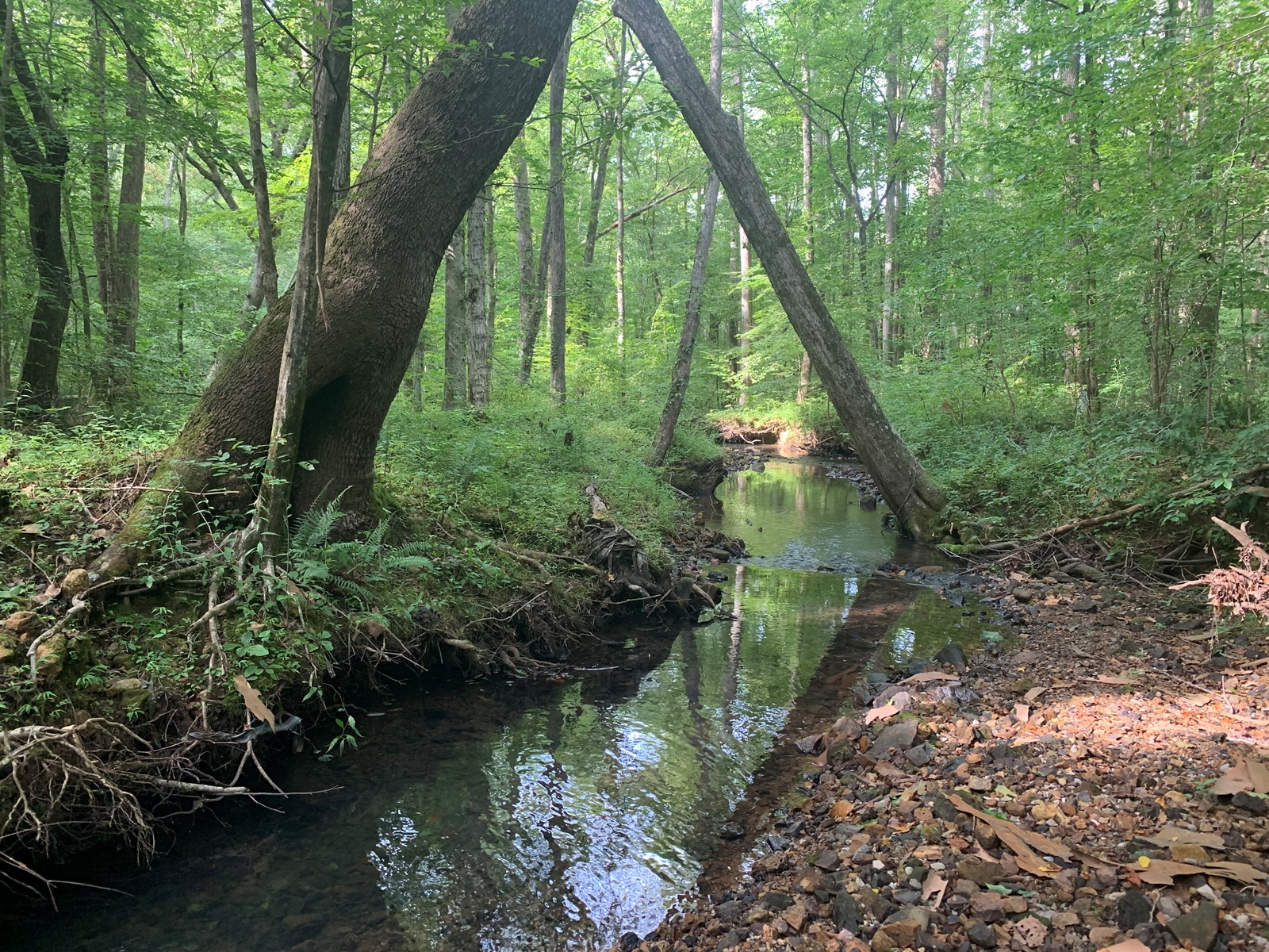 LAND FOR SALE IN TENNESSEE WITH CREEK OFFERING   HUNTING