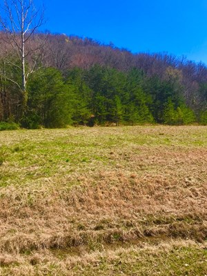 TIMBER, RECREATIONAL, HIKING, HORSE RIDING LAND FOR SALE