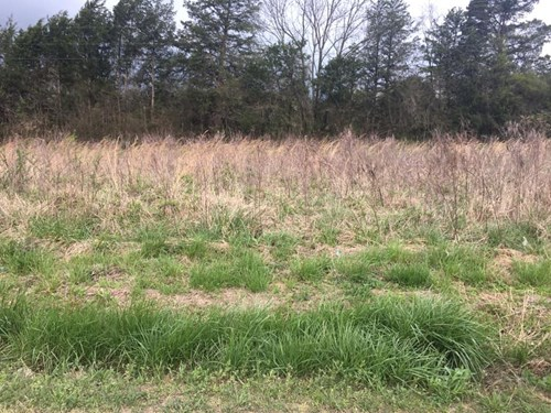 FLAT LOT, BUILD YOUR HOME HERE! LOT #2. MORE LOTS AVAILABLE!