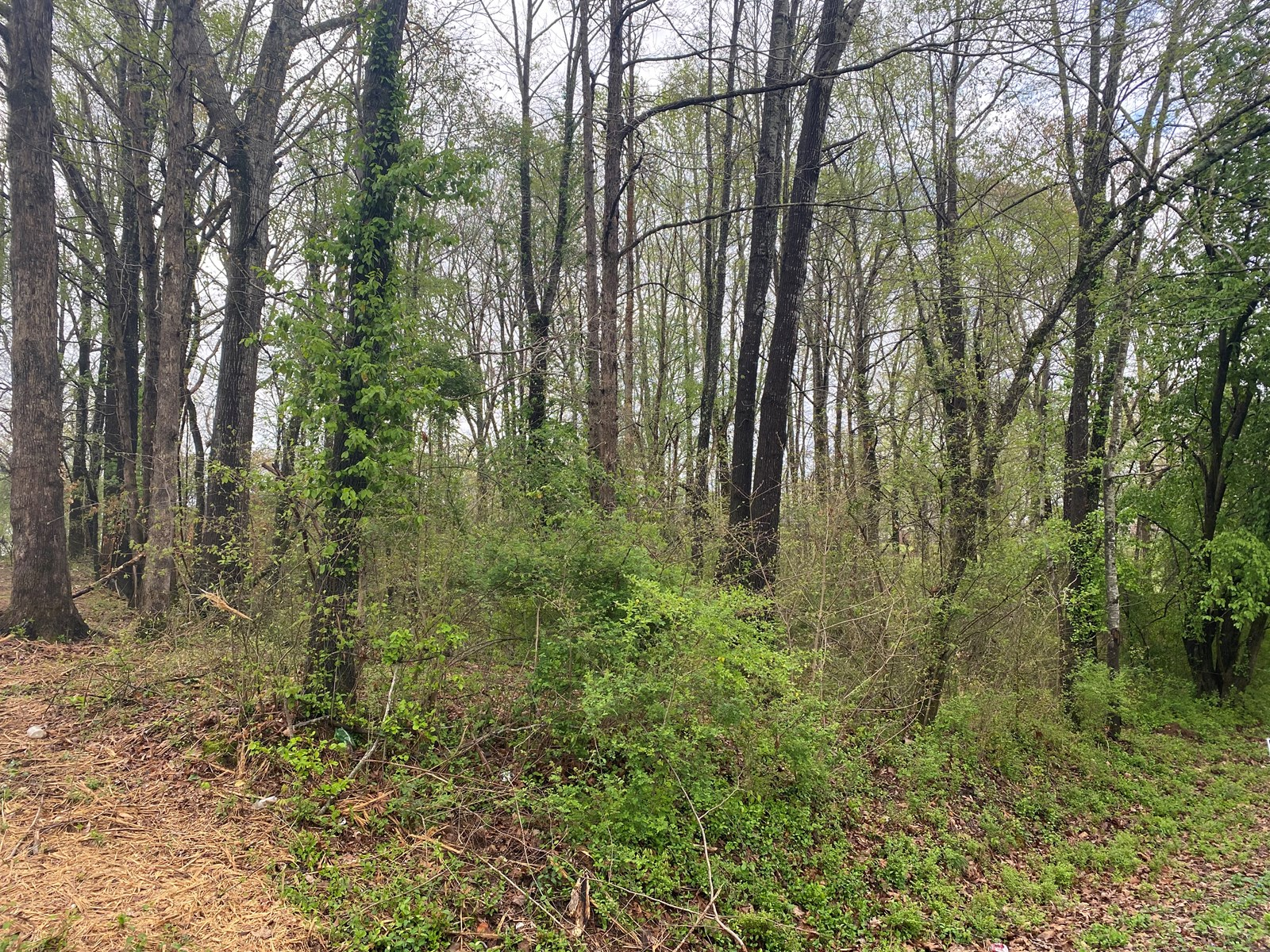 LOT FOR SALE IN LAWRENCEBURG TN WITH ALL PUBLIC UTILITIES