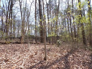 19.68 ACRES IN MORRISTOWN, TN FOR SALE