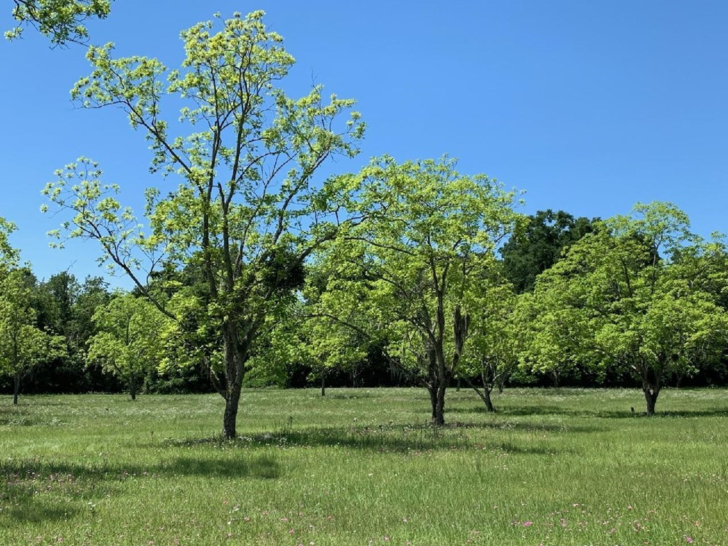 12 Acre Vacant land