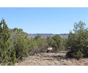 Land in Seligman AZ for Sale  No HOA On-Grid, Borders Public