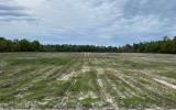10 ACRES JUST PLANTED WITH PINES $50,000!