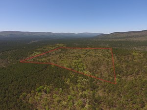 BLUE MOUNTAIN 40 ACRES ADJOINING NATIONAL FOREST