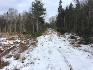 RECREATIONAL LAND FOR SALE IN MAINE
