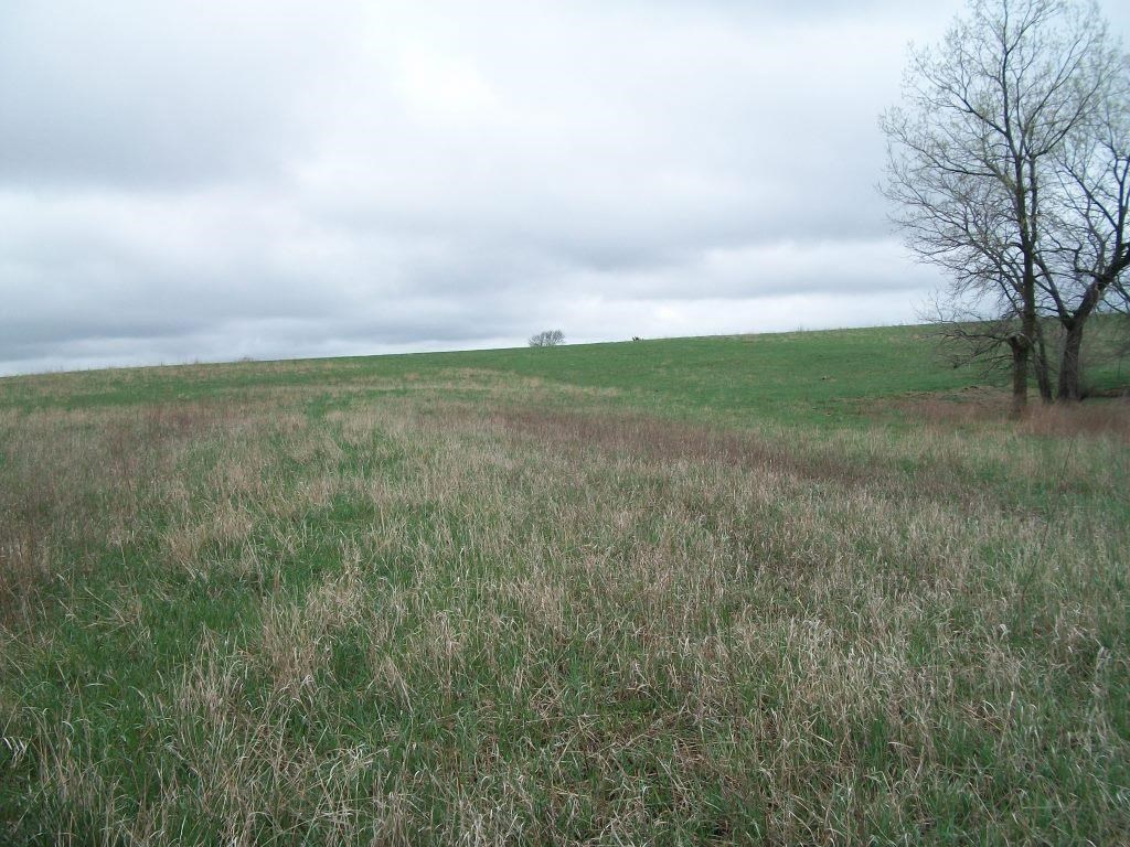 Outstanding Income Producing CRP Farm, Ringgold Co, IA