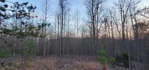 15 ACRES HUNTING LAND FOR SALE IN SNEEDVILLE, TN
