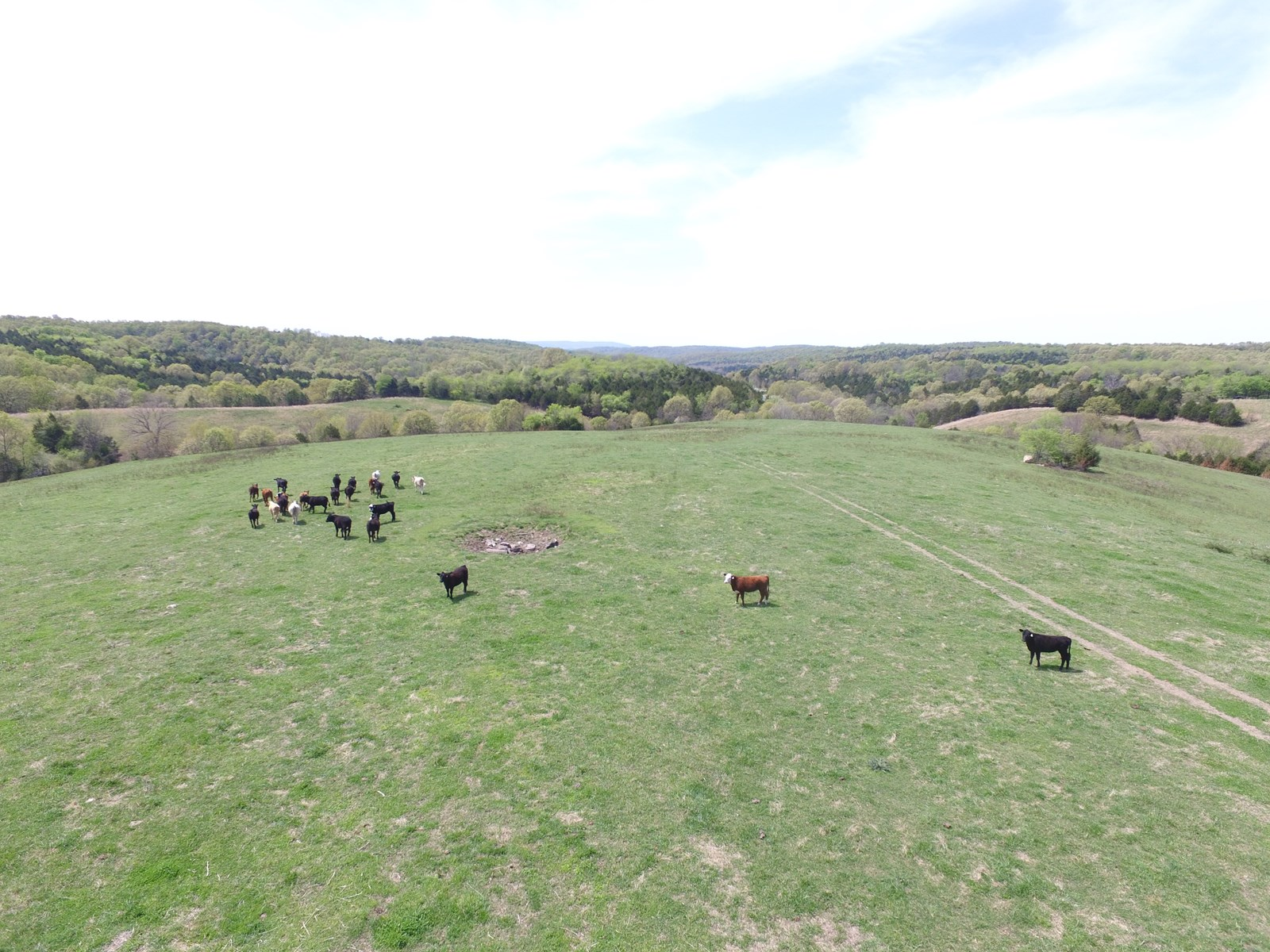 CATTLE ACREAGE WITH MULTIPLE SPRINGS & BUILDING SPOTS