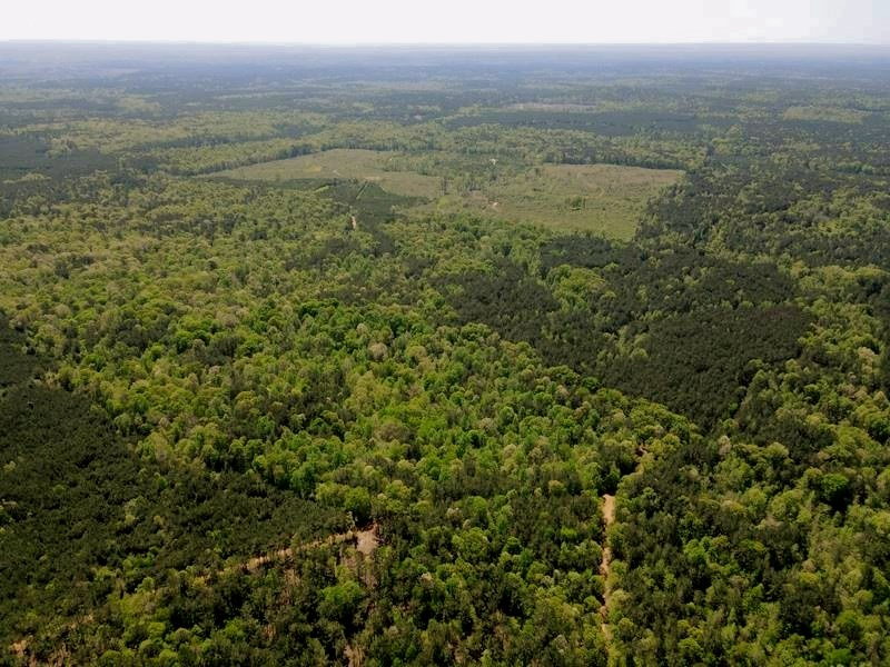 67 Acres Hunting, Timber Land for Sale Franklin County MS