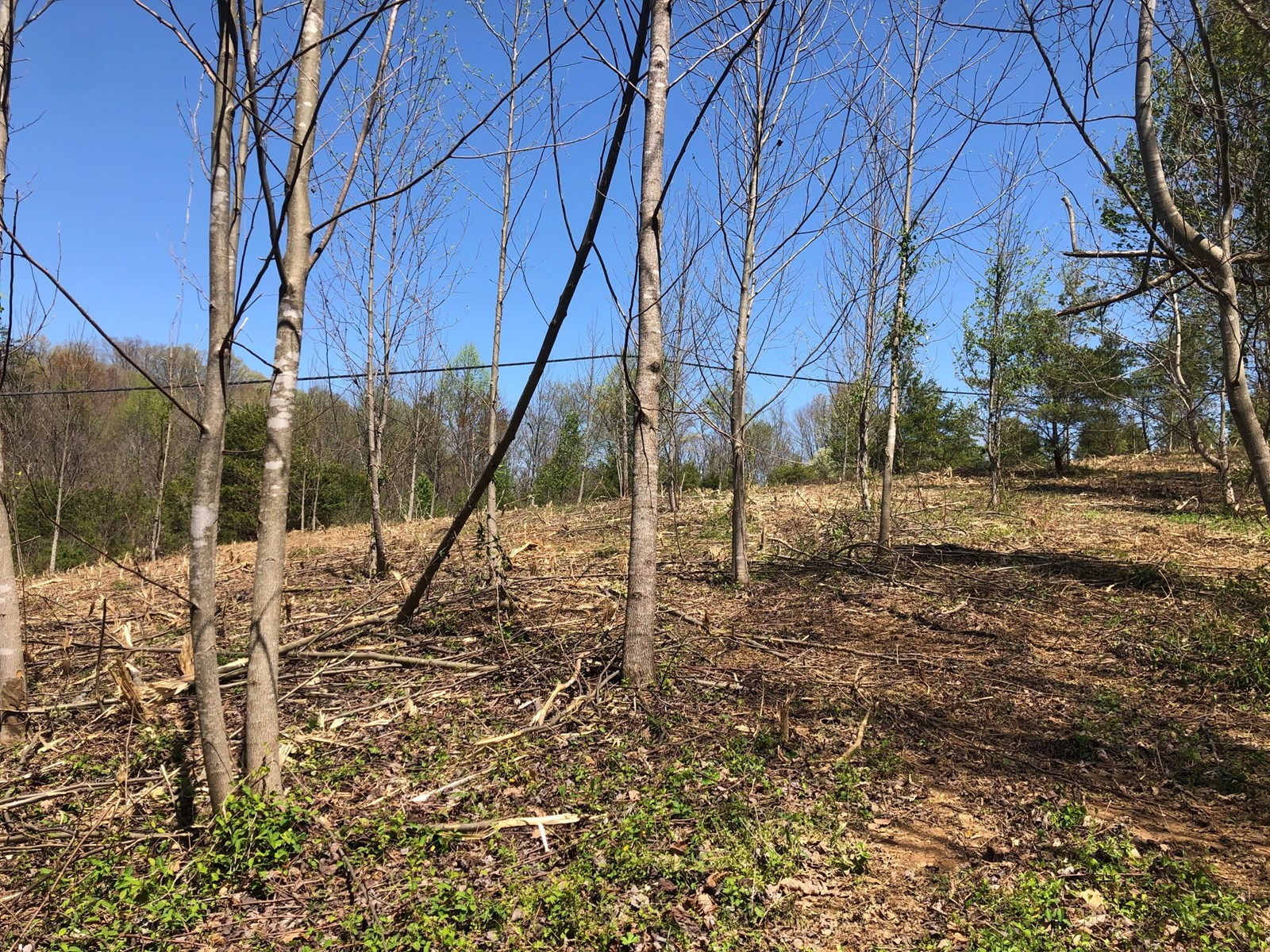 4+ Acres Unrestricted Land in East TN For Sale