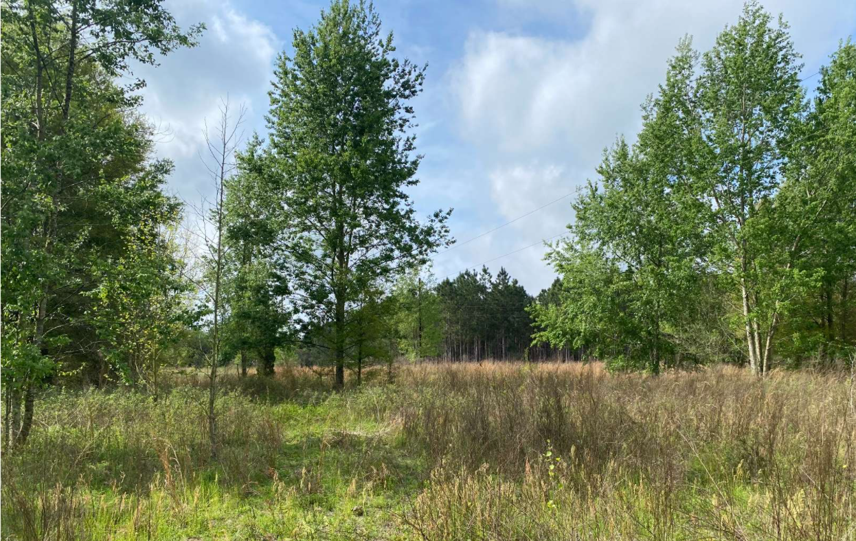 Mostly Cleared Acreage For Sale in Mayo, FL for Future Home
