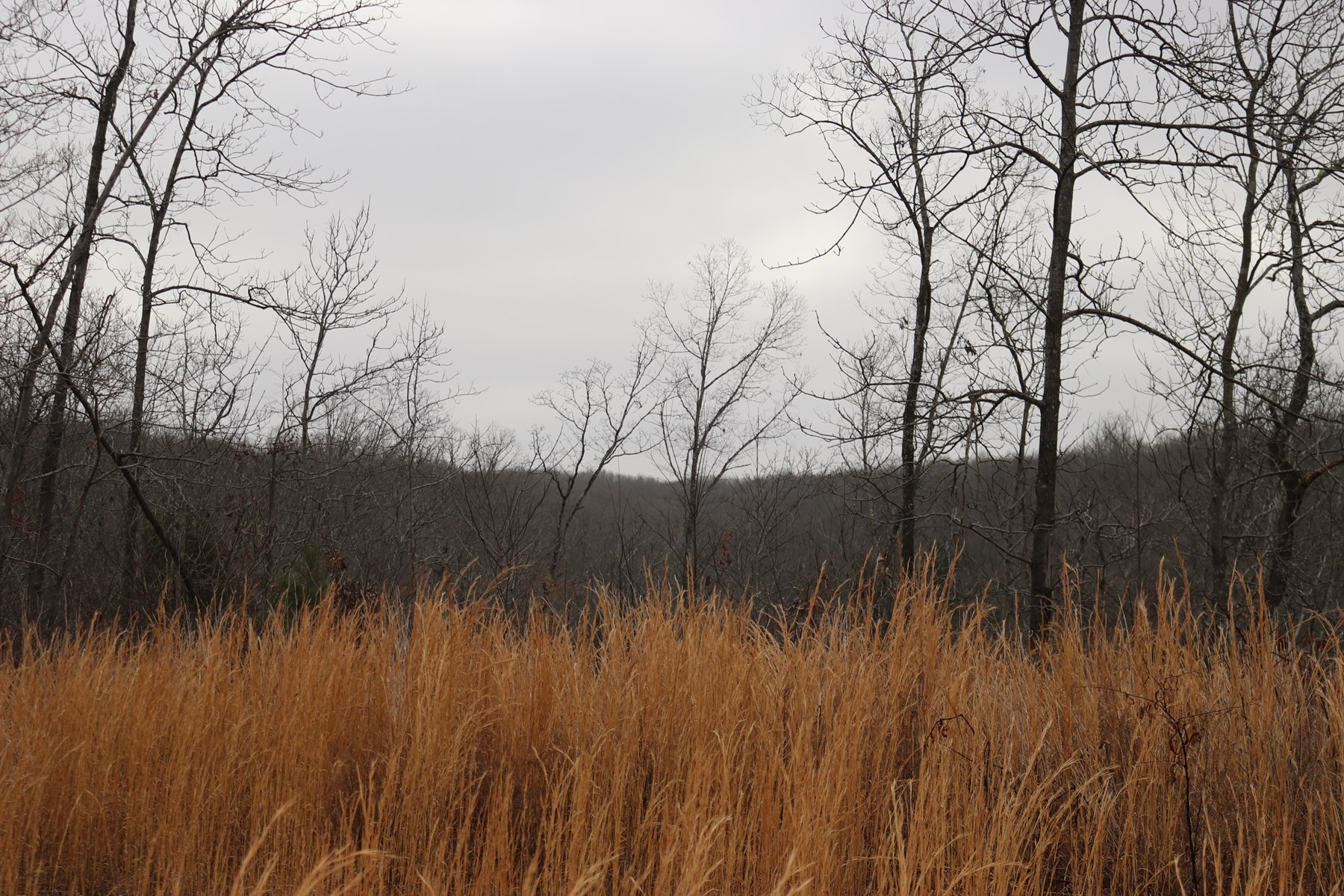 Wooded Tract 70 Acres