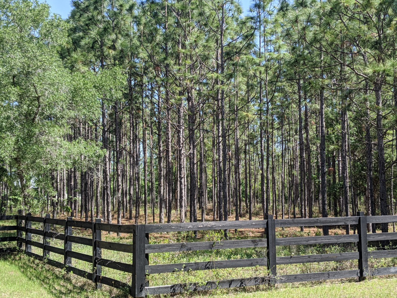 5 Beautifully Wooded Acres in Newberry Florida