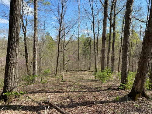 158 timbered acres for sale near Tompkinsville, Ky.