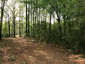 22 ACRES RURAL HUNTING LAND FOR SALE FORREST COUNTY, MS