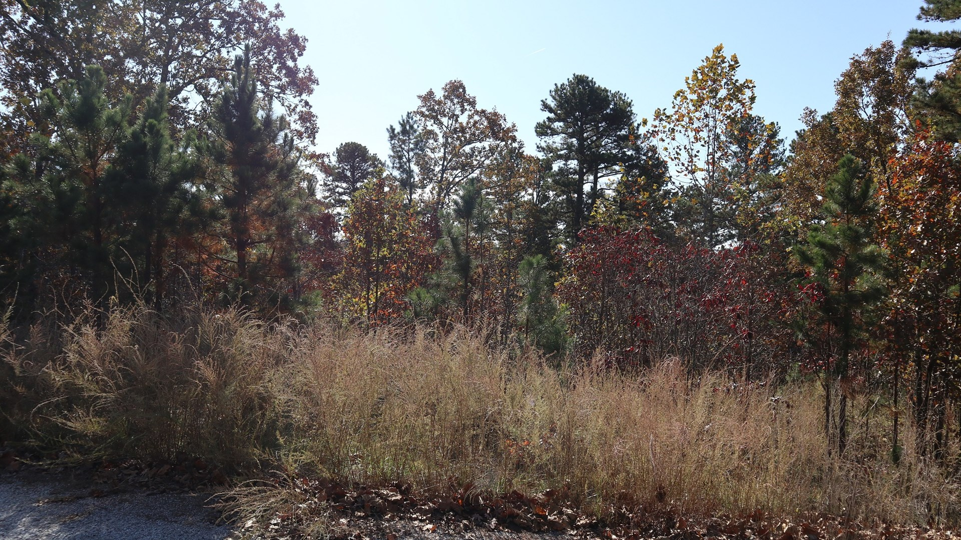 Vacant Land in Mammoth Spring AR