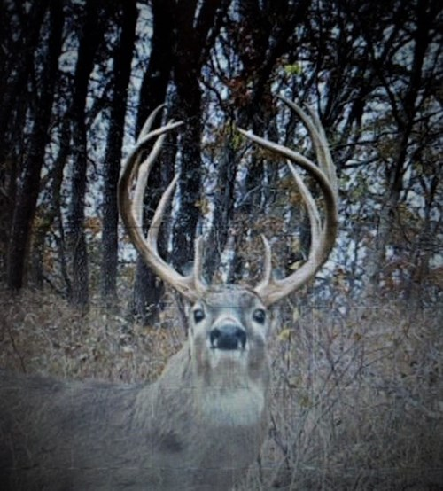 Kansas Big Buck Trophy Property