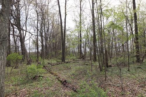 Wooded Lot Delaware County, Sunbury, Ohio