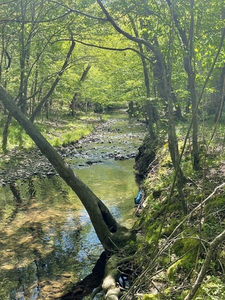 Fletcher Creek in Little Rock