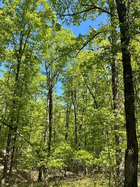 Land with Mature timber