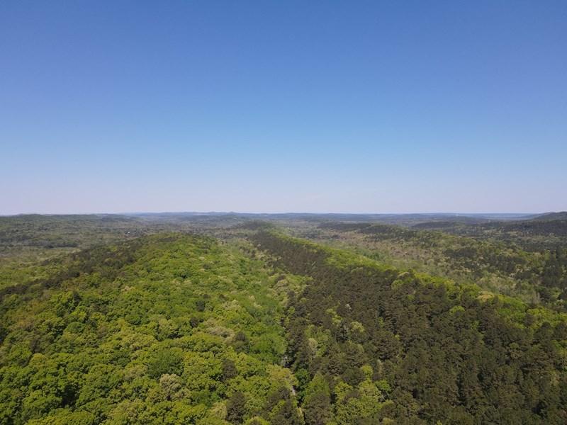 154 Acress of Timberland