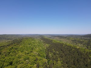 DEVELOPMENT LAND WITH TIMBER FOR SALE IN LITTLE ROCK, AR