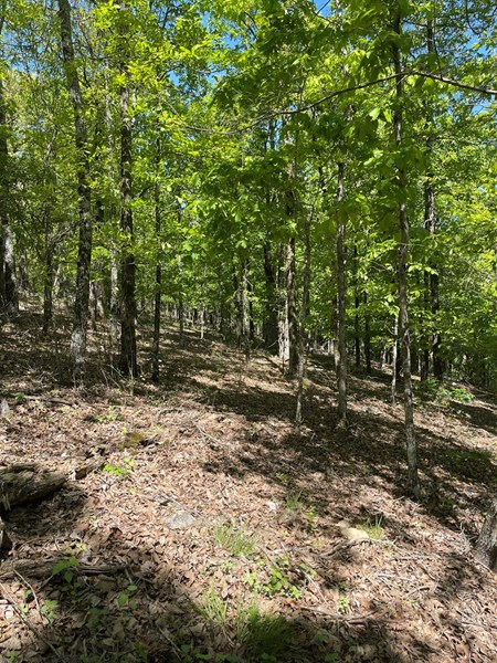 Land in Central Arkansas for Sale