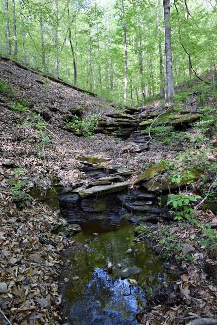 66.49 Acres Hunting Land Hardwood Timber $160,000