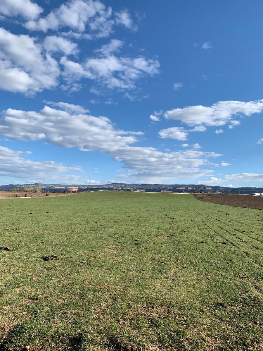 Western Colorado Farm for Sale