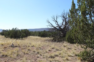 SELIGMAN AZ SMALL ACREAGE FOR SALE WITH POWER AND PAVED ROAD