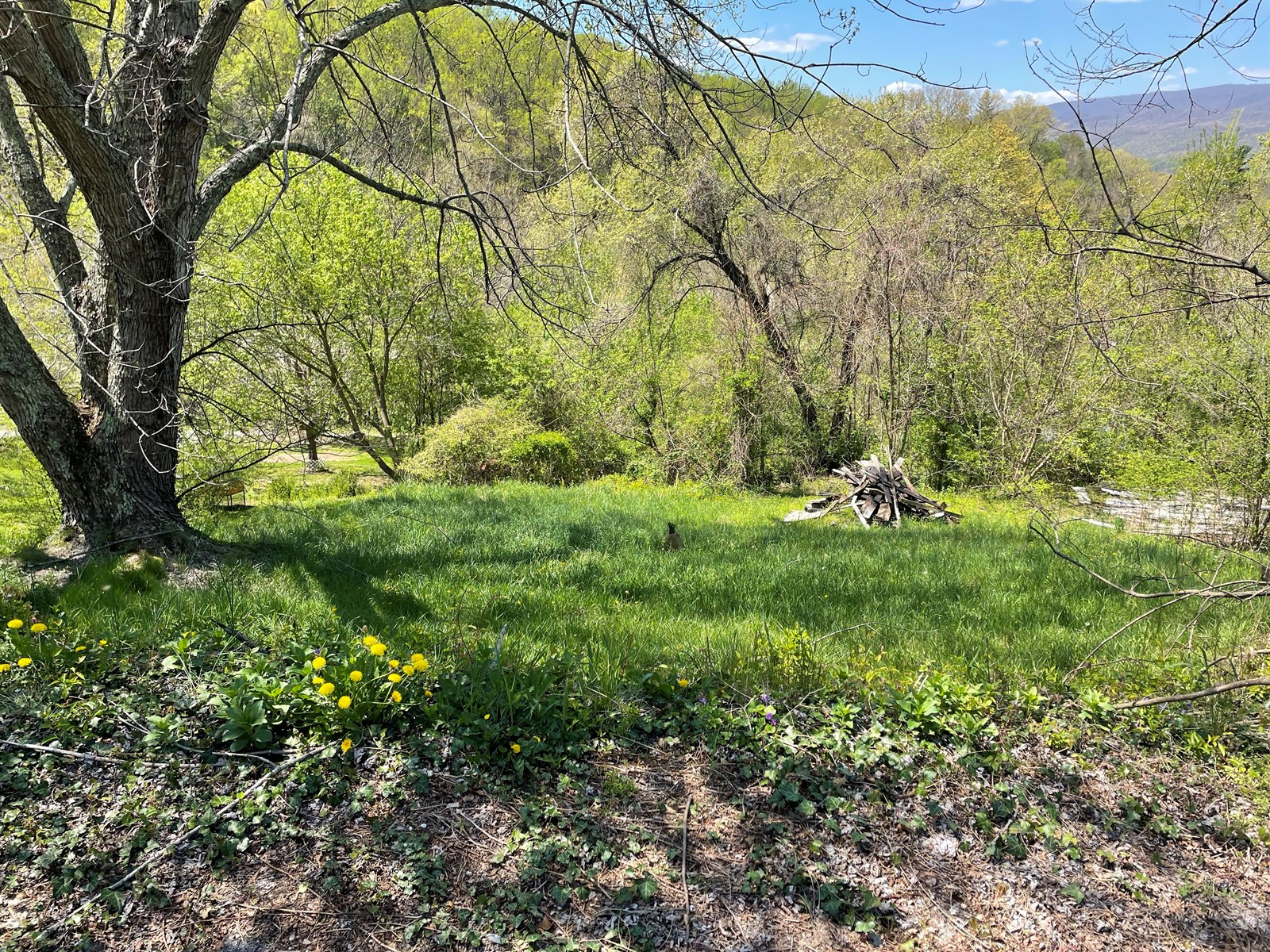 Building Lot for Sale in Giles County VA