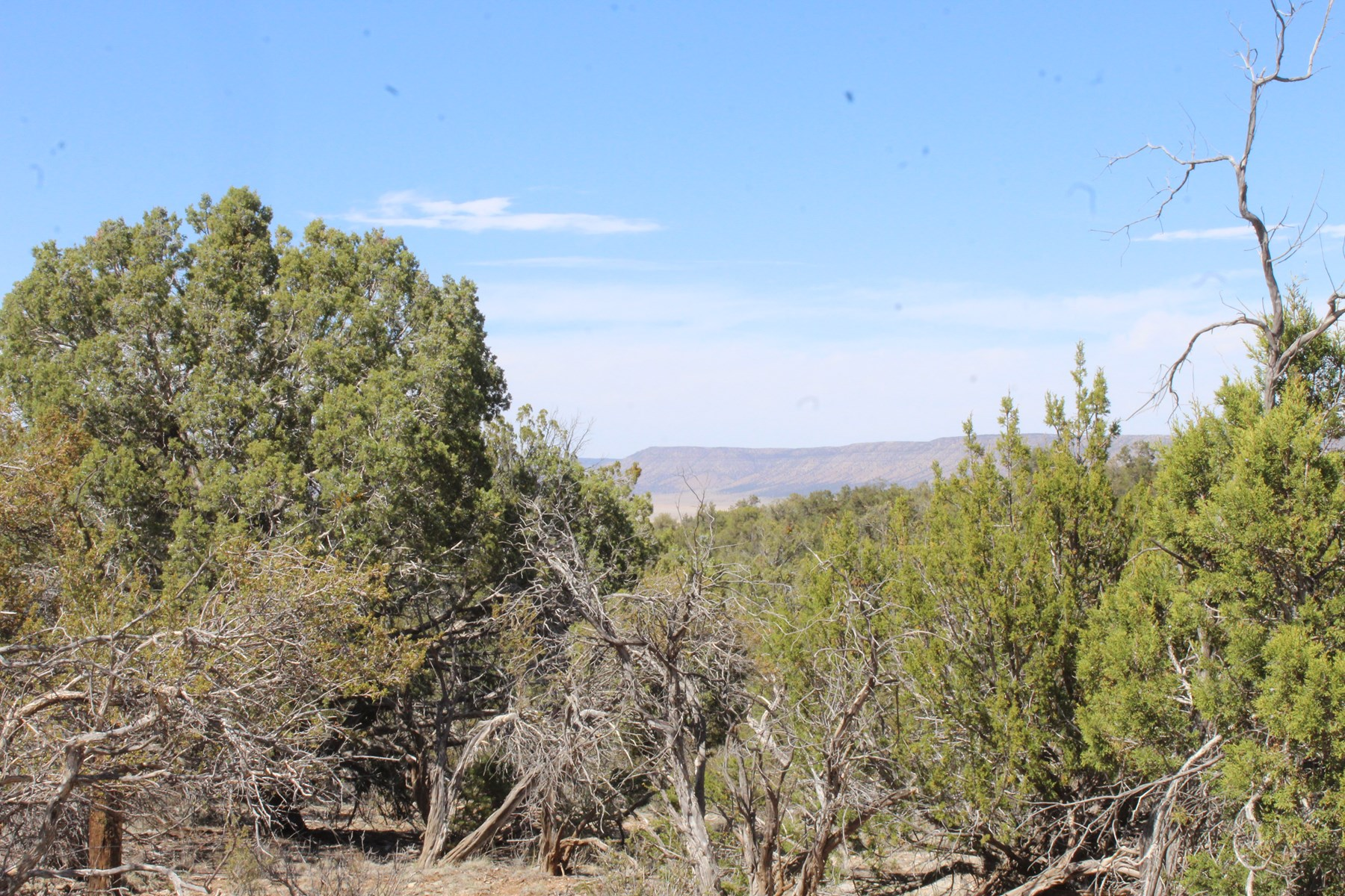Mountain acreage for sale in Seligman AZ No HOA