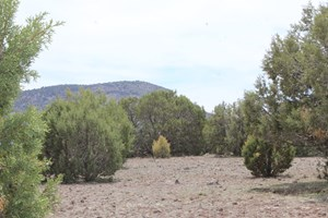 MOUNTAIN LAND FOR SALE IN WESTWOOD RANCHES NO HOA
