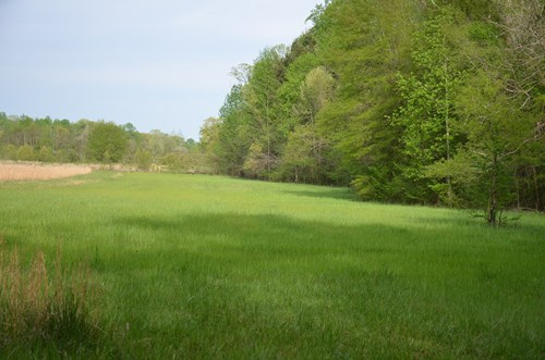 240 Acre - Beautiful Valley Bankhead National forest